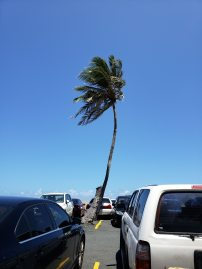 This palm tree lost its partner. :(